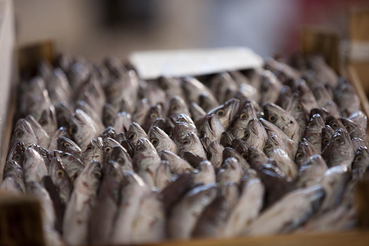 COD Mare Mediterranean Sea Mercato Del Pesce Sicilia Sicily Sushi Trapani Cassetta Pesce Fish Boxes Fish Market Food Freshness Hake Healthy Eating Market Mediterraneo Merluccius Merluzzi Merluzzo Nasello Pesce Pescheria Rete Seafood
