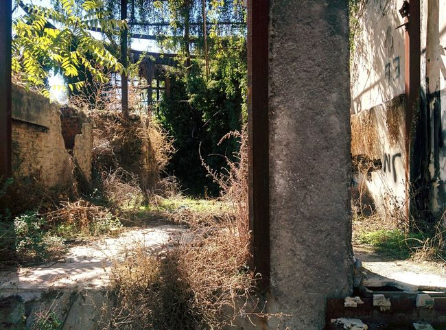 🇬🇷 Architecture Tranquil Scene Lens Flare Abandoned Places Abandoned Buildings Abandoned House Old House No Money Greek Summer Greek Architecture Summer Vibes Places I've Been Today Places Around The World Urbanexploration Urban Decay Decay
