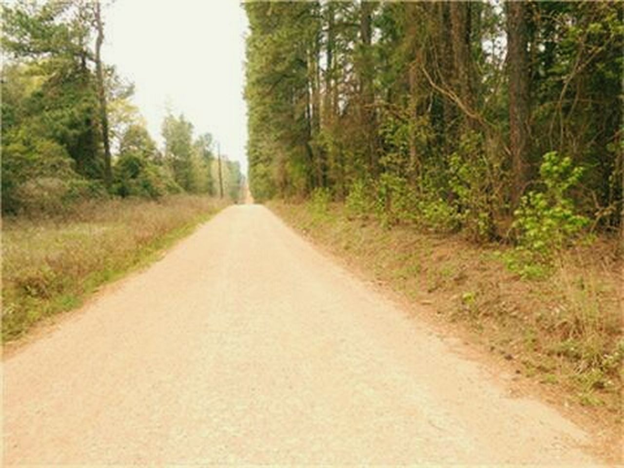 road, dirt road, tree, nature, rural scene, single lane road, forest, no people, summer, scenics, the way forward, outdoors, landscape, day, straight