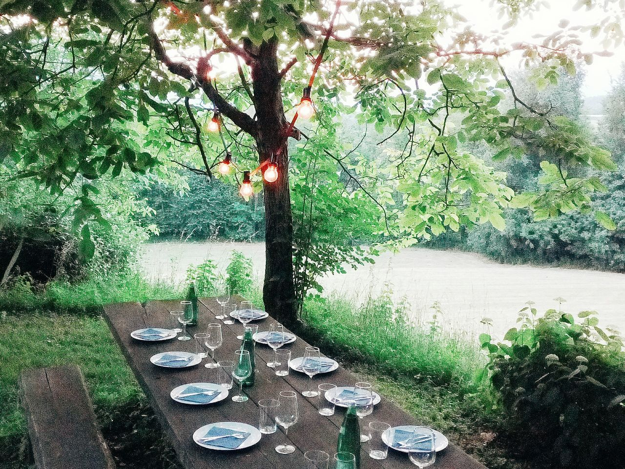 Dinner Dinner Table Outdoors Tuscany Italy Holiday Day No People Growth Green Color Nature Tree Close-up