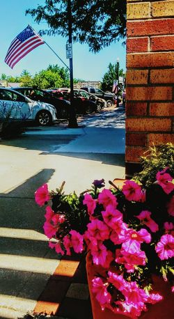 Flower Car Pink Color Nature Transportation No People Outdoors Day Sunlight At The Market. Eyeem Photography Eyeem Market Irwin Collection Summertime ☀ Sidewalk Sommergefühle