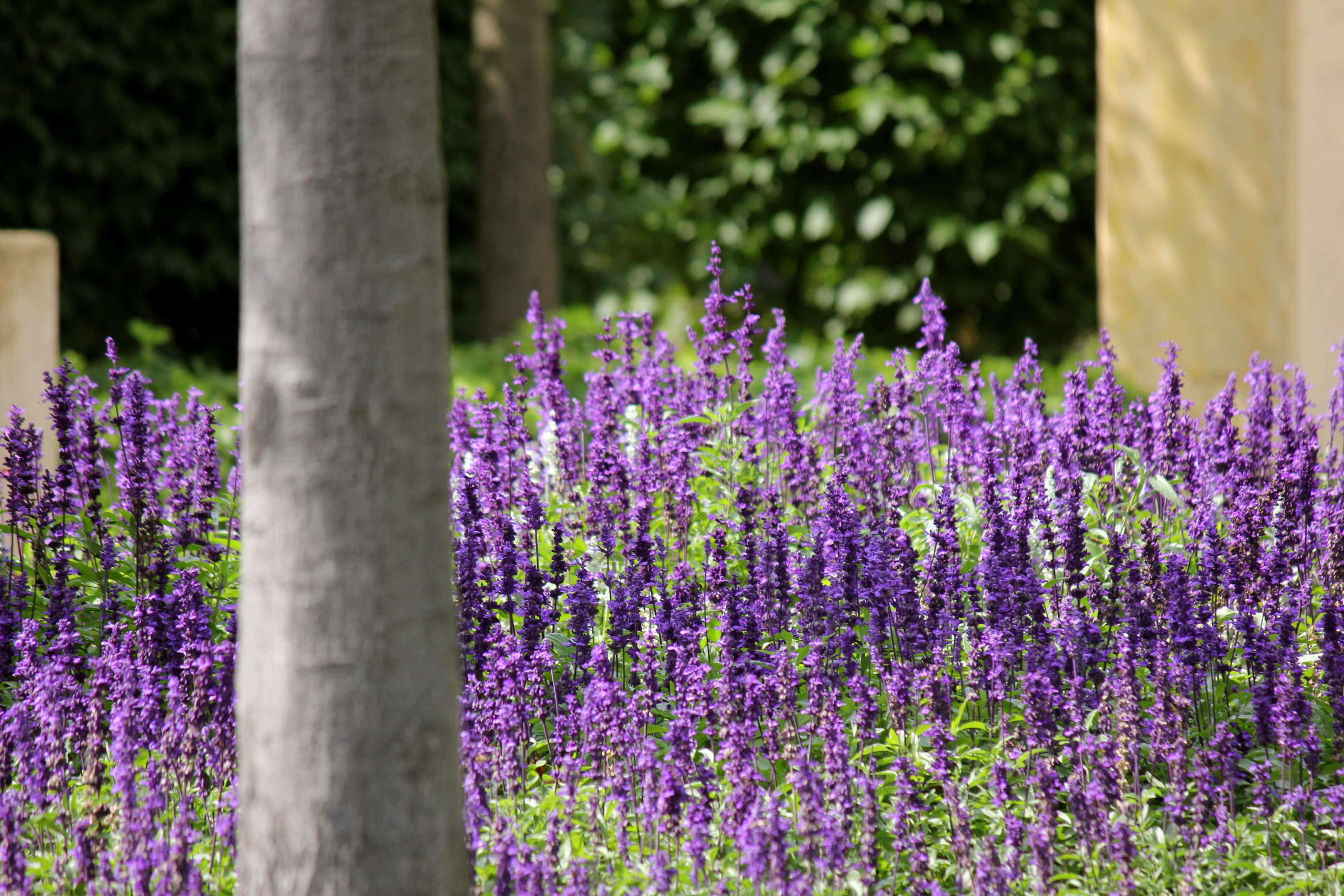 flower, purple, nature, fragility, beauty in nature, growth, freshness, plant, day, no people, close-up, outdoors, blooming, flower head, lavender colored, lavender