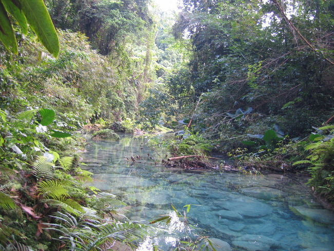 Beauty In Nature Branch Flowing Flowing Water Forest Green Green Color Growth Idyllic Jamaica Jamaican Lush Foliage Nature Non-urban Scene Plant River Scenics Stream Tourism Tranquil Scene Tranquility Tree Vacations Water WoodLand