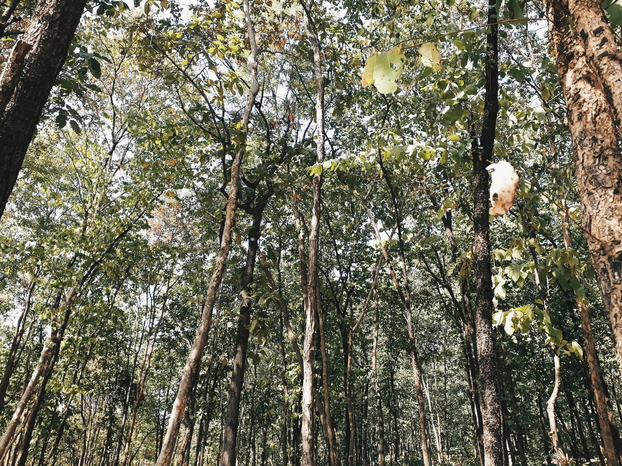 Low Angle View Tree Backgrounds Full Frame Growth Nature No People Beauty In Nature Sky Outdoors Scenics Day Bamboo Grove