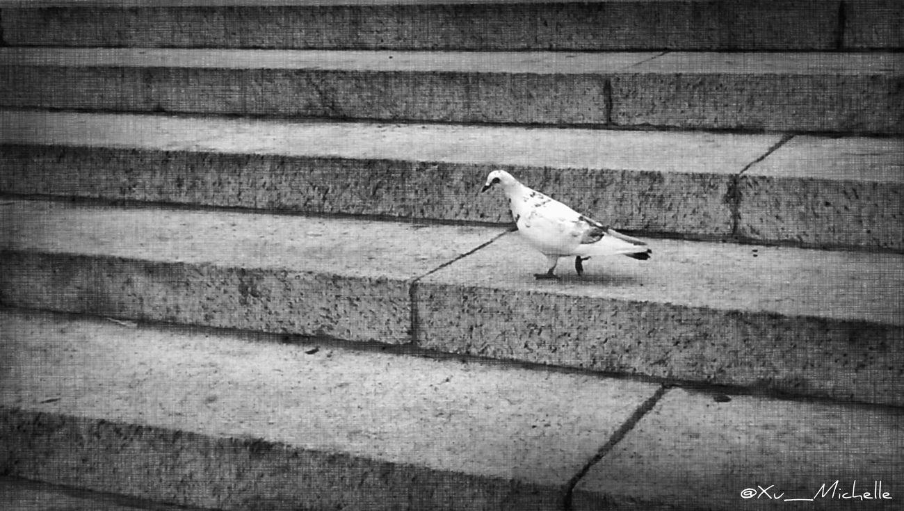 On the steps of Columbia University ~ Blackandwhite Monochrome Birds