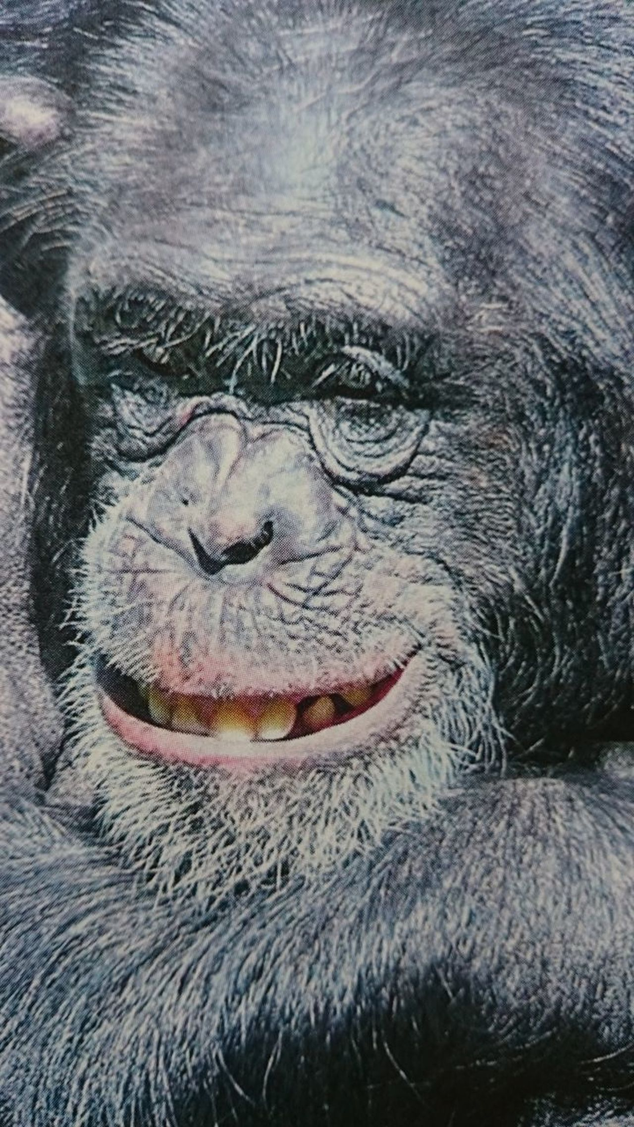 Animals In The Wild Close-up Day Keep Smiling Laughing Monkey No People Outdoors Take It Easy