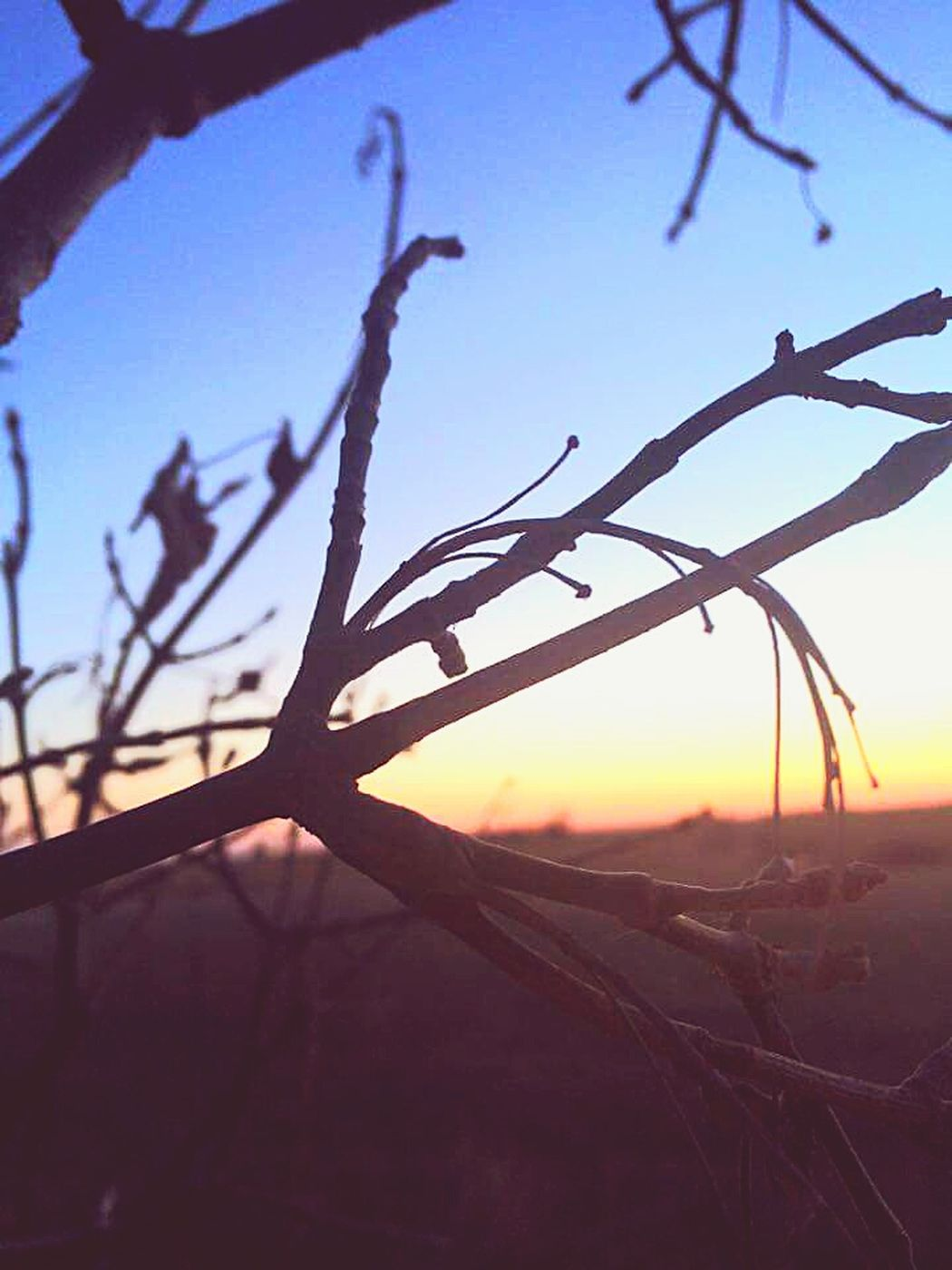 Prairie_collection Nature_collection EyeEm Nature Lover Prairie Scenes Taking Photos Tree_collection