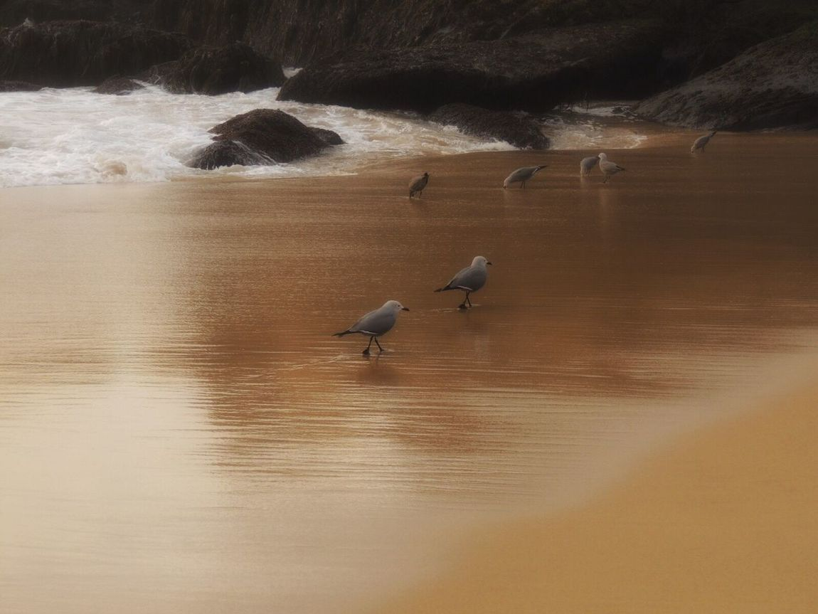 Birds And Sand Sand Sand Beach Reflections In The Sand Life Is A Beach Beach Beach Photography Birds On The Beach Waves, Ocean, Nature Waves And Rocks Sand And Beach Tranquil Scene Beauty In Nature Simple Moment I Love Nature! Enjoying Life Enjoying The Sun Beautiful Day Reñaca Beach , Chile