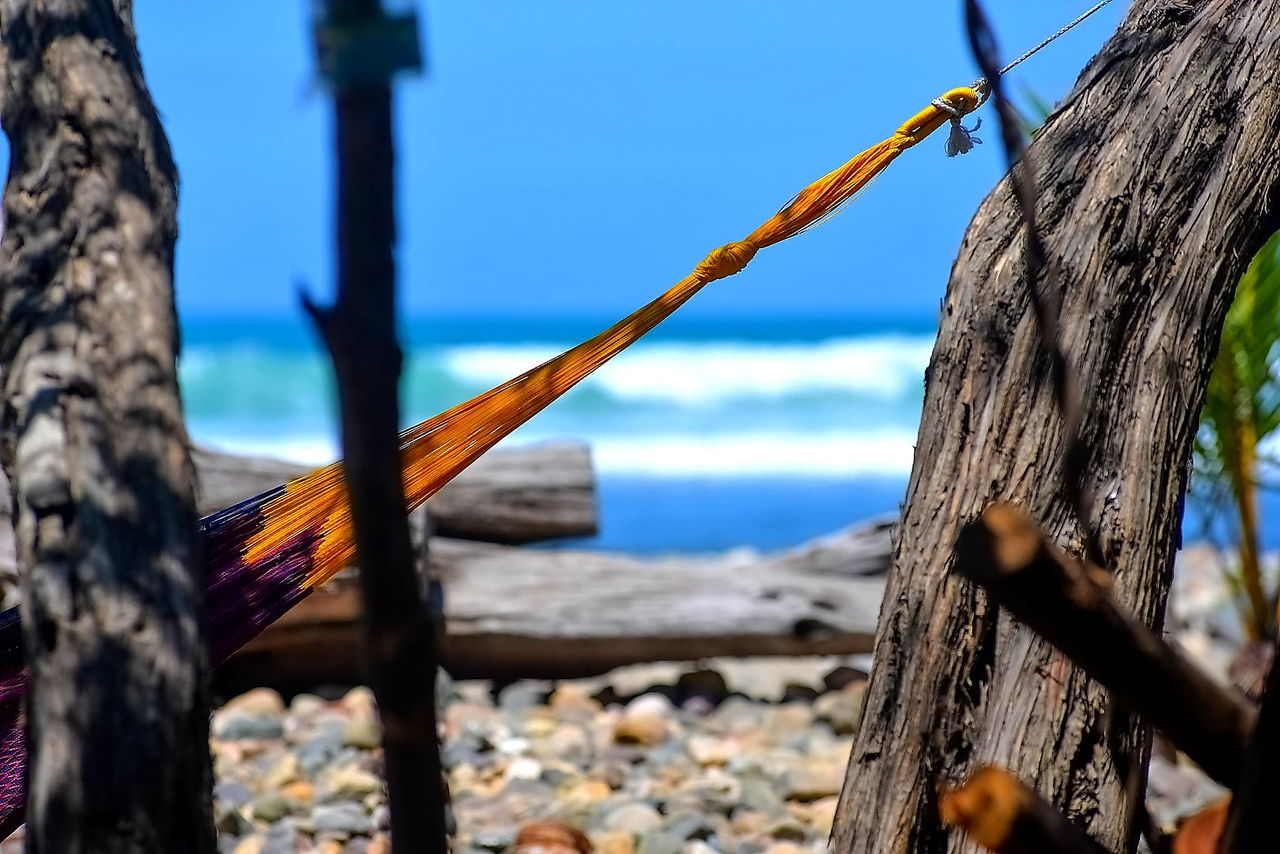 tree trunk, nature, wood - material, outdoors, beauty in nature, day, sea, tree, no people, sunlight, water, blue, close-up, sky, branch, beach, horizon over water, dead tree