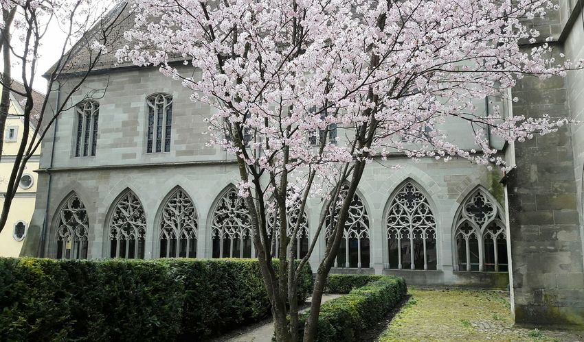 Spring Springtime Built Structure Architecture Building Exterior Outdoors Tranquility Monastery Church Architecture Blossoming Tree Beauty In Nature Church Kontemplation Church Windows No People Day Beauty In Nature Nature Blossoming  Constance Konstanz