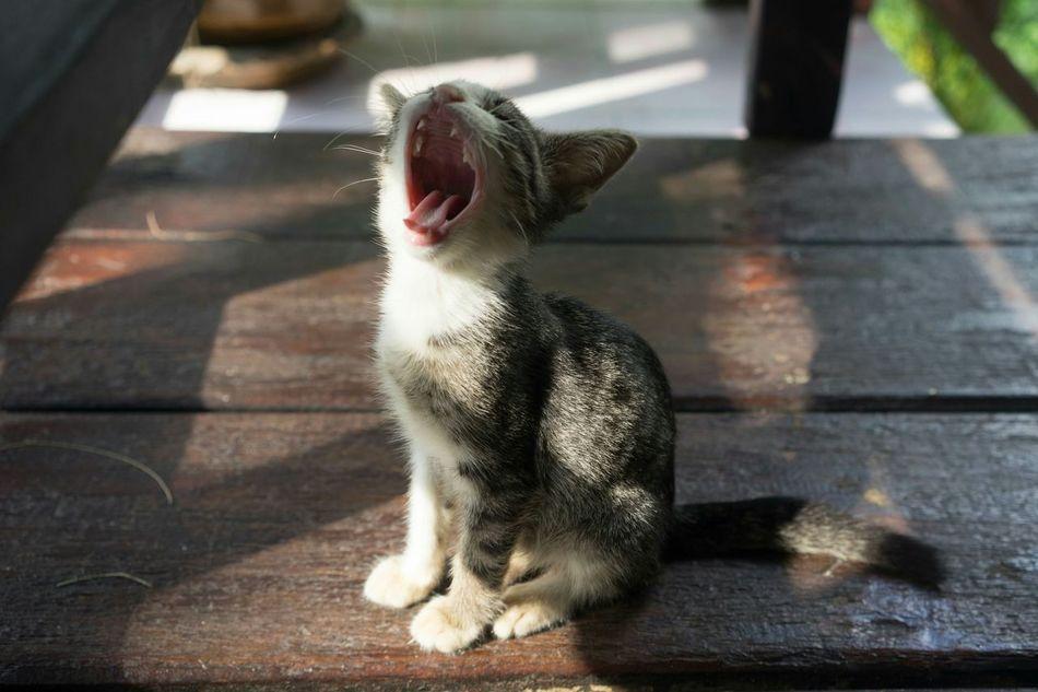 Beautiful stock photos of baby animals, Animal Themes, Boardwalk, Close-Up, Day
