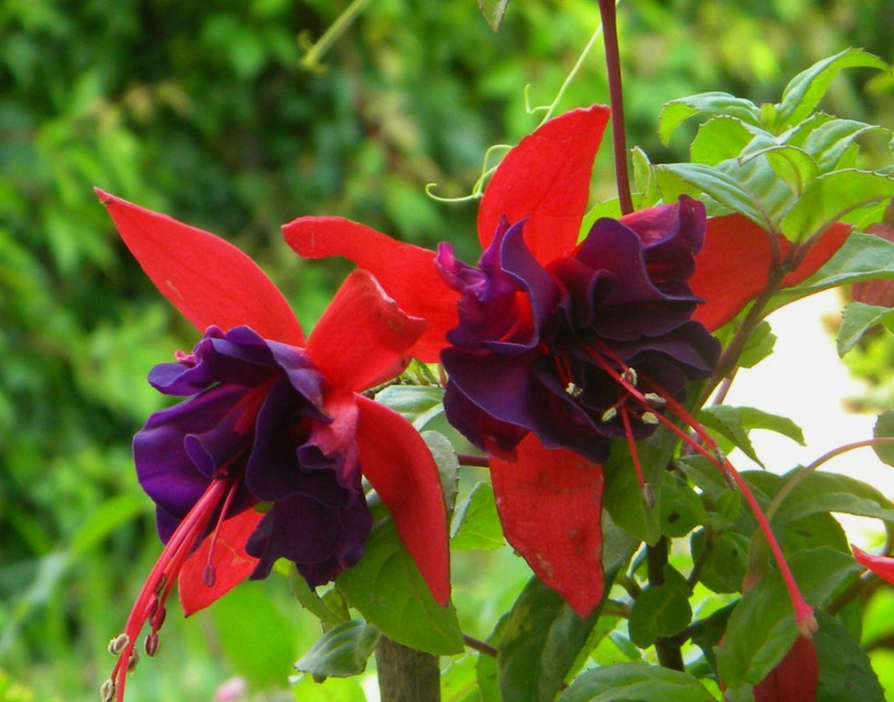 Recordaresvivir RecordarteEsUnHermosoLugar Arete Jardin Botanico