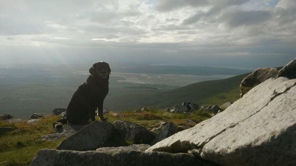 Mountain Dog Peak A Week