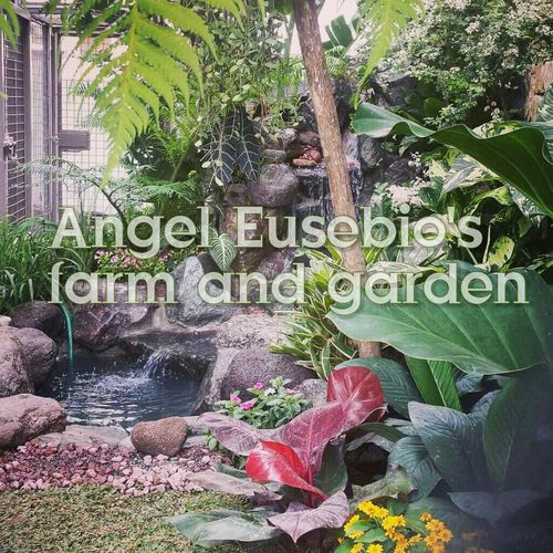 Check This Out Enjoying Life EyeEm Best Shots - Landscape Landscaping_services Good Service Quality Satisfaction Originality