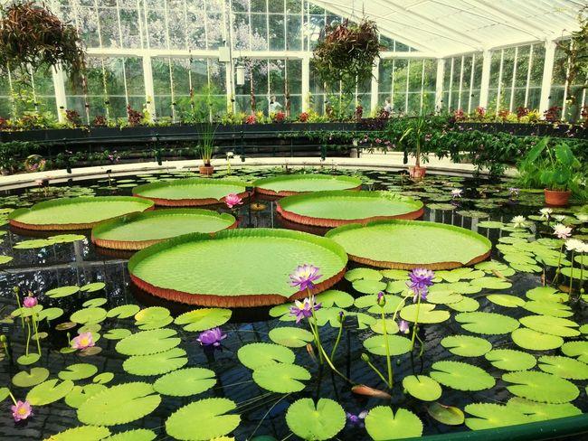 Searoses Plants Water