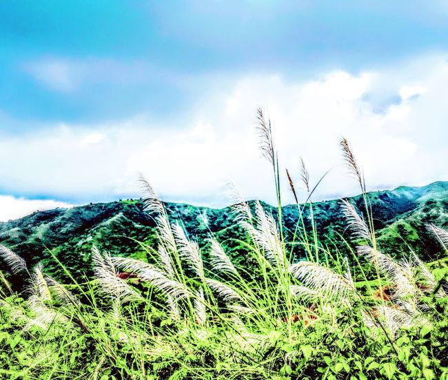 When clouds almost kiss the mountain, what a beautiful sight. Eyeem Philippines EyeEm Nature Lover TravelPhilippines Growth Plant Nature Sky Grass Green Color Beauty In Nature Tranquility Scenics Close-up Mountain Tranquil Scene Green Non-urban Scene Growing Focus On Foreground Outdoors Day Cloud - Sky Uncultivated