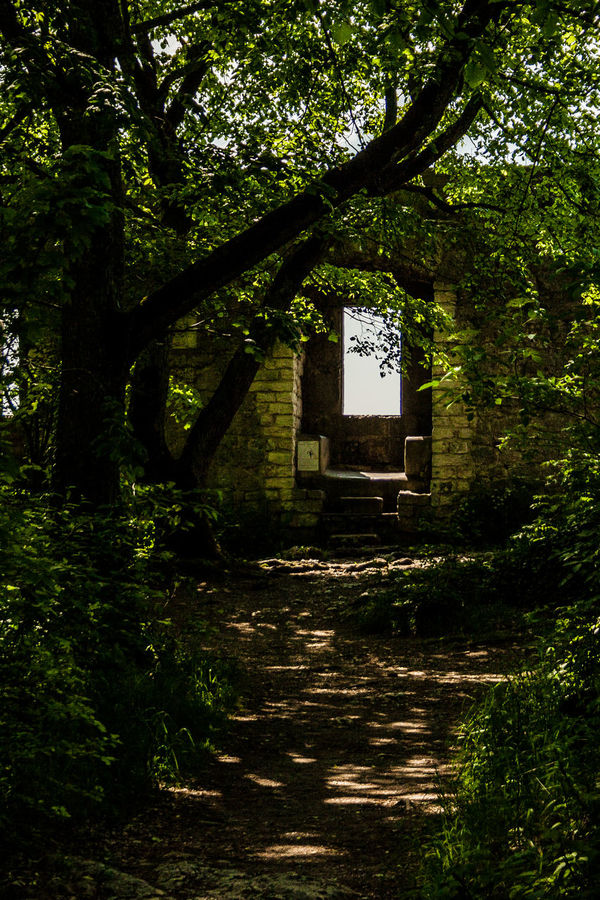 Architecture Building Exterior Built Structure Day Heubach Lost Places Nature No People Old Construction Outdoors Rosenstein Rosenstein Heubach Tree Window