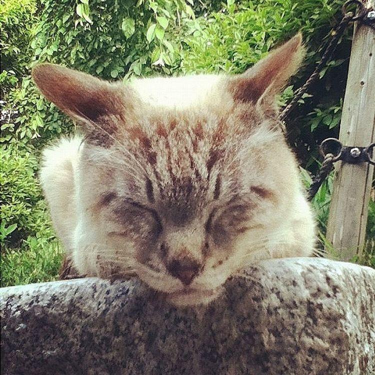 円山公園 Cats ネコ