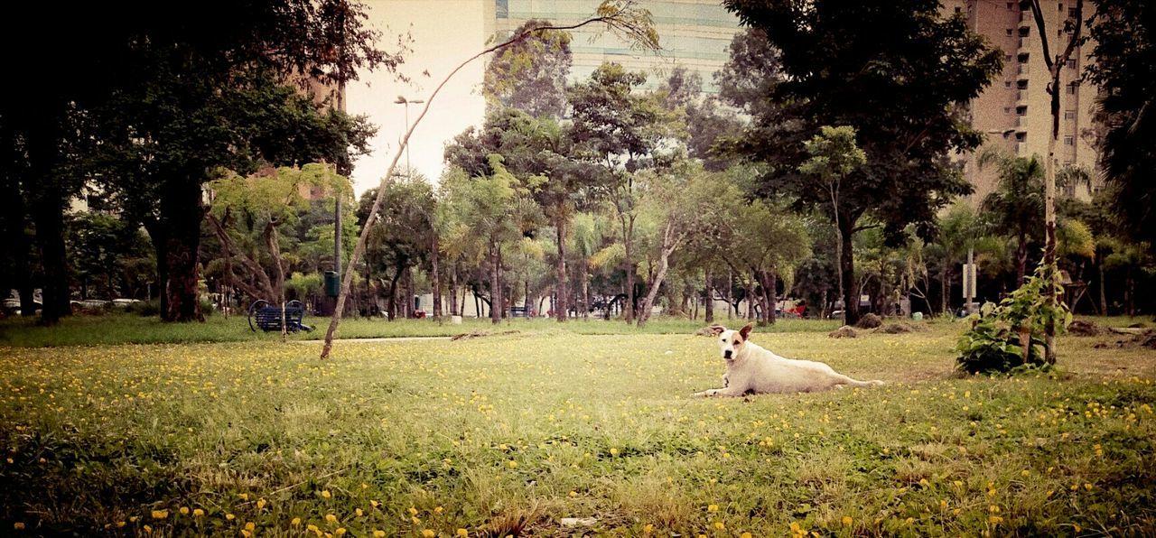 Dog Park Taking Photos