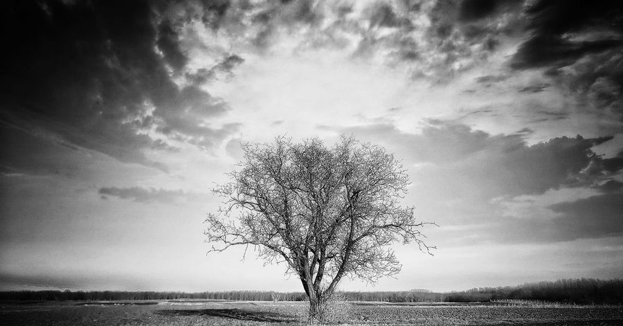 B&W,iPhone 7 Plus,Olloclip Super-Wide,Snapseed Landscape Sky Beauty In Nature Nature Lone Tranquility Tranquil Scene Isolated Horizon Over Land Majestic Bare Tree Field Solitude Scenics Tree Outdoors Day Branch No People