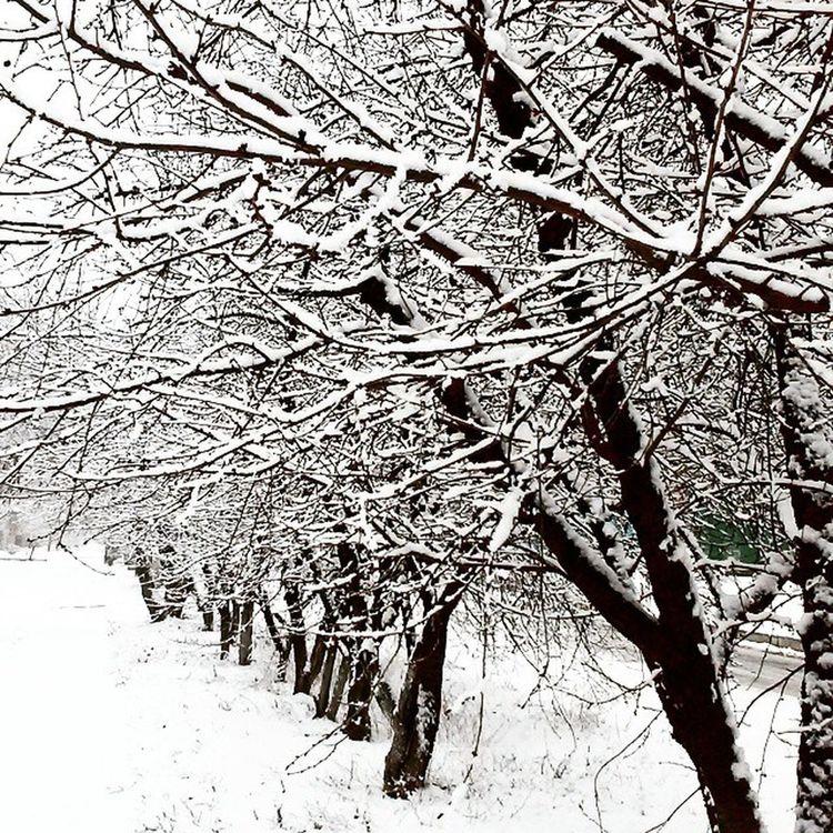 ❄ Vcso Vcsoukraine Winter Snow Love