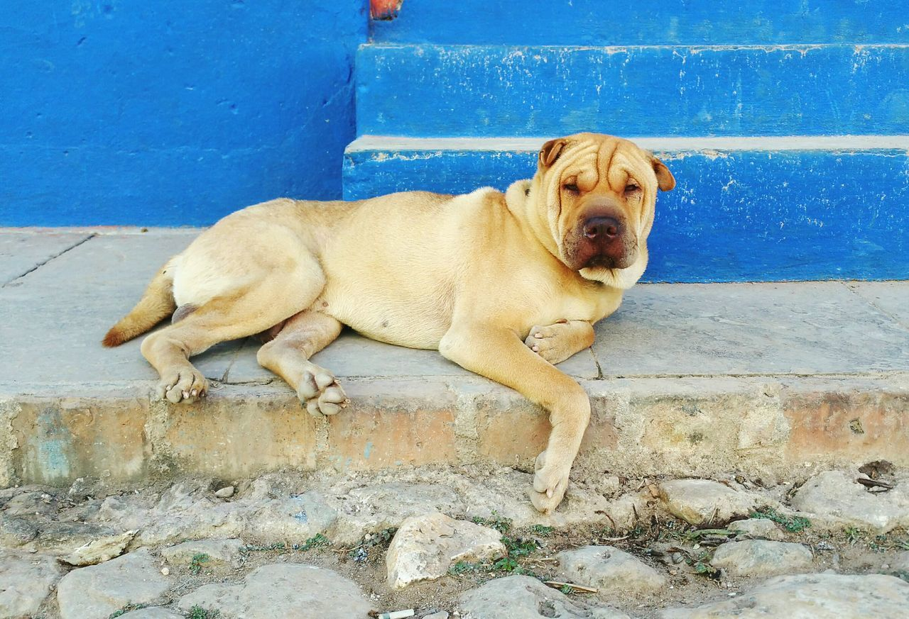 Beautiful stock photos of dogs, Animal Themes, Brown, Cuba, Day