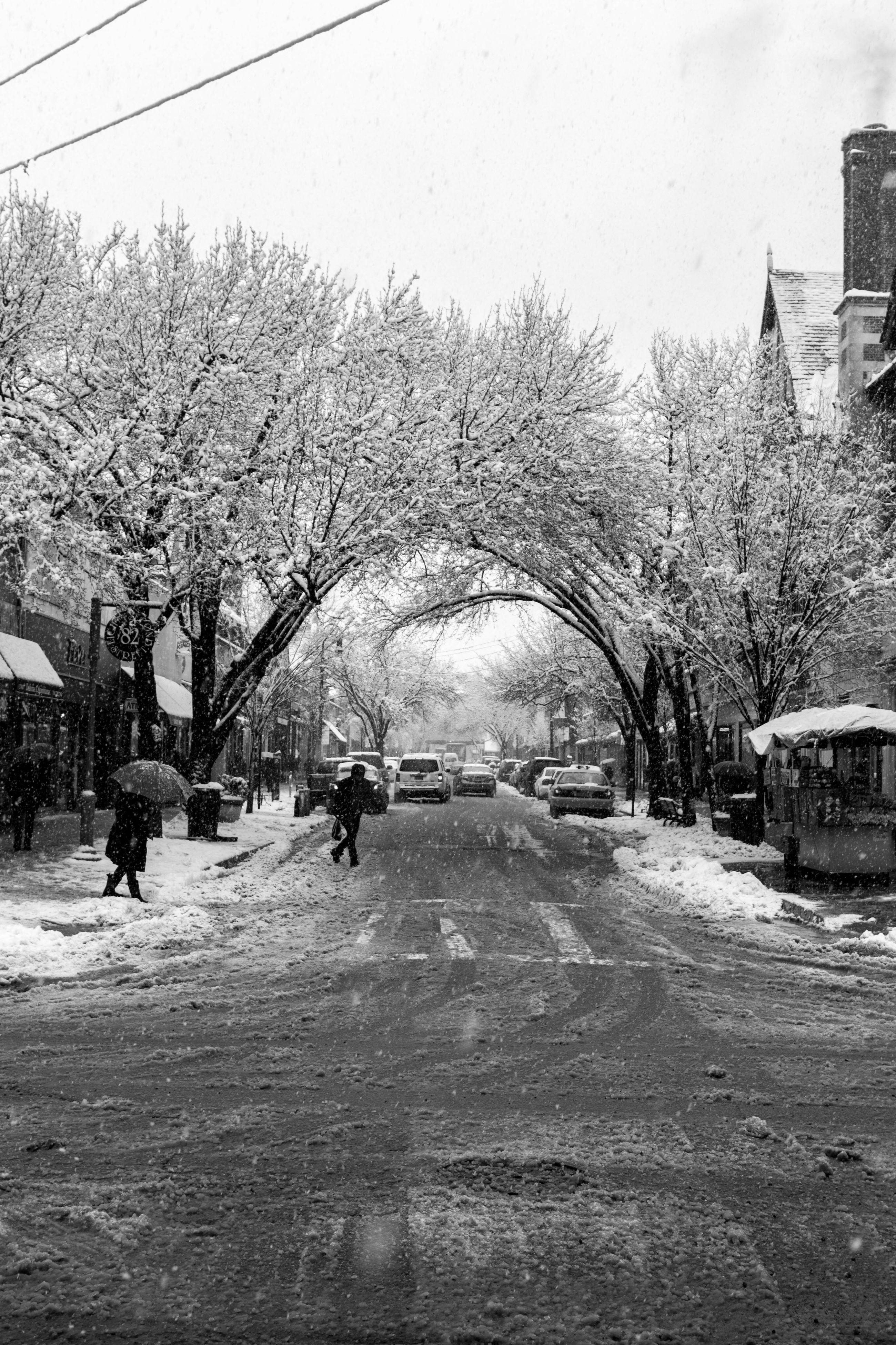 tree, car, transportation, snow, winter, season, road, cold temperature, street, mode of transport, land vehicle, weather, the way forward, bare tree, nature, day, diminishing perspective, city life, tranquil scene, scenics, outdoors, tranquility