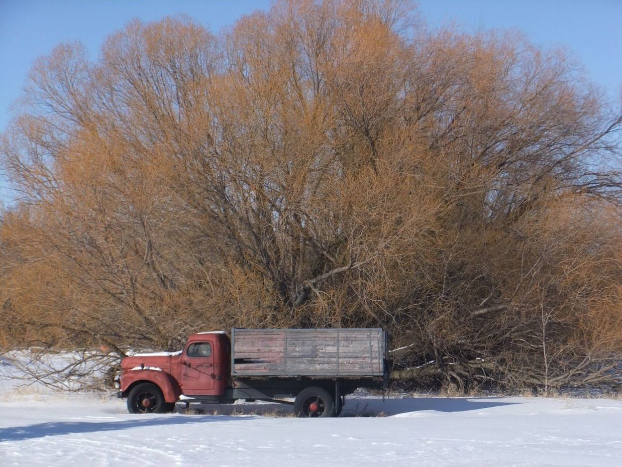 Old Truck Old Beautiful Tree Winterscapes Snow ❄ Country Side Prairie Scenes Taking Photos Simple Photography Diamond T Truck Vintage Truck