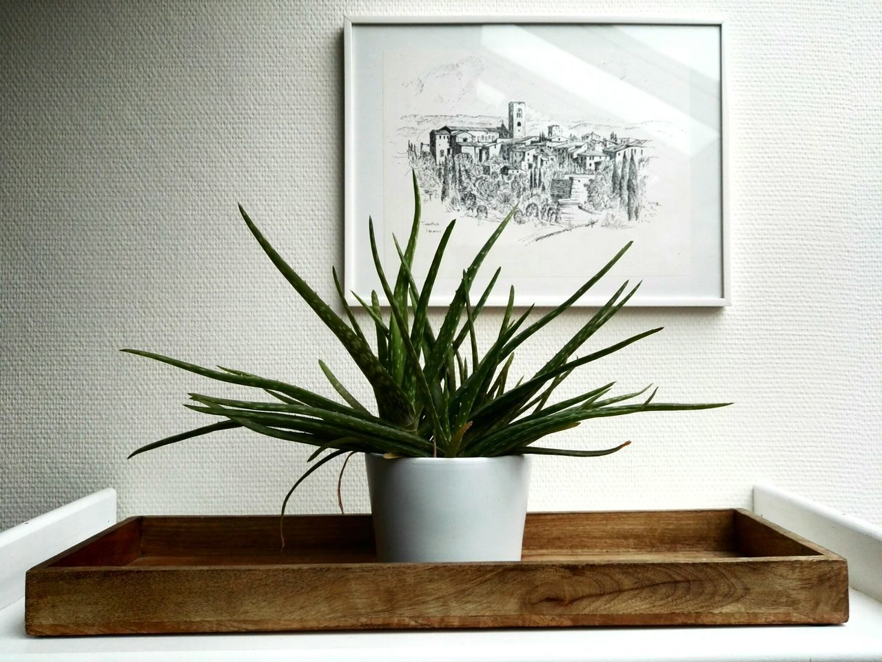 Plant Indoors  No People Day Aloe Vera Aloe Vera Plant Flower Picture Drawn