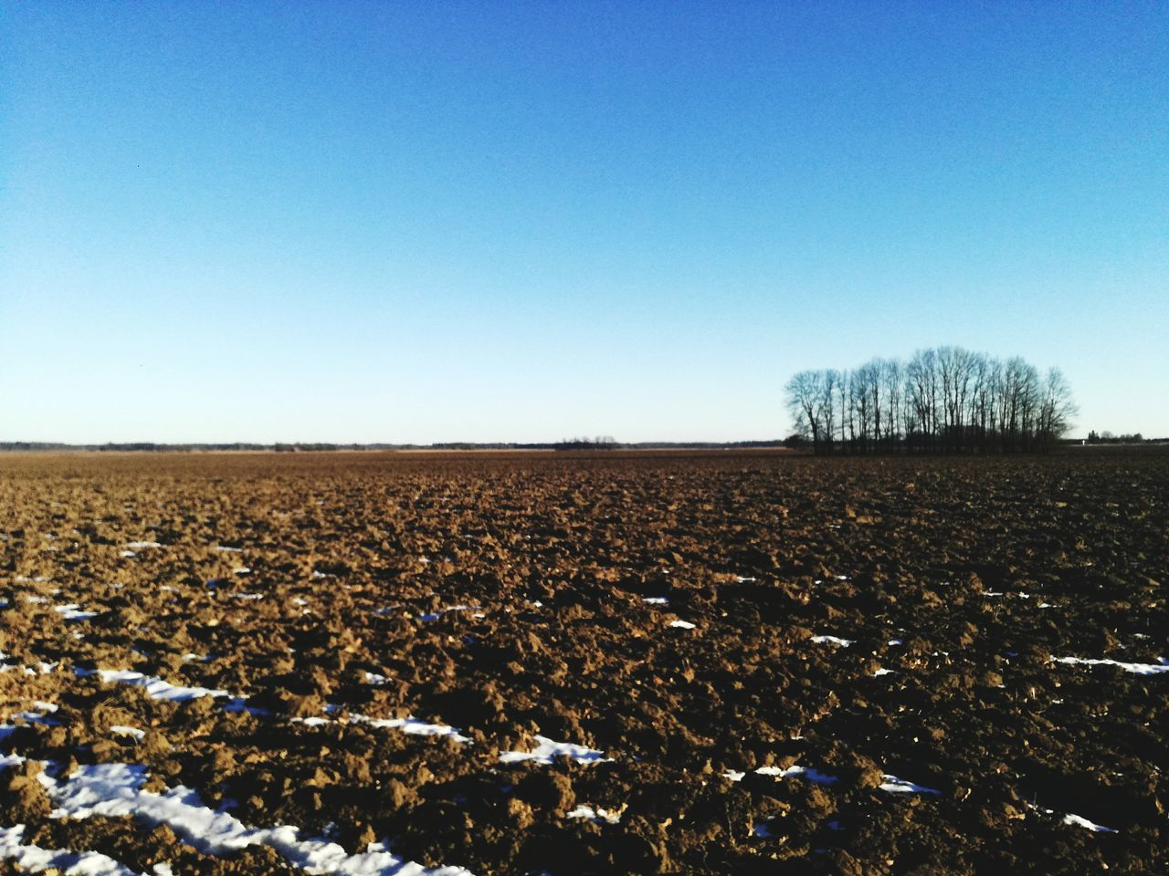 Farm Agriculture Clear Sky Growth Sky Plough No People Landscape Nature Rural Scene Outdoors Day Field Shiny Grassfield Winter Frosty Morning Beuty Of Nature Freshness Beauty In Nature Mess Mud Tree Nature Brown