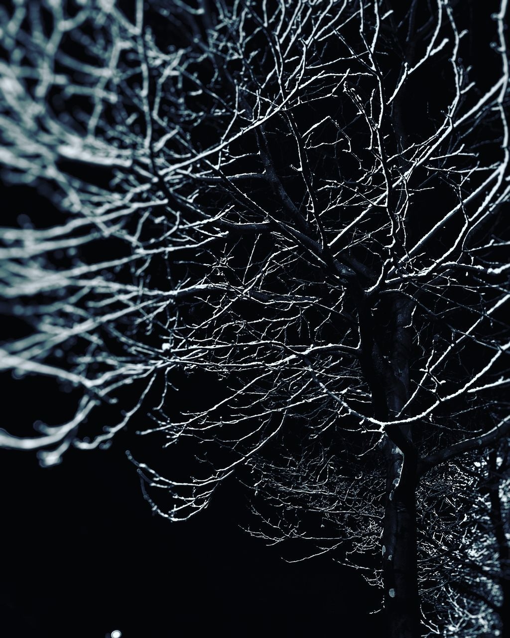branch, bare tree, tree, no people, night, dead plant, tranquility, nature, outdoors, close-up, black background, complexity, beauty in nature, water, sky