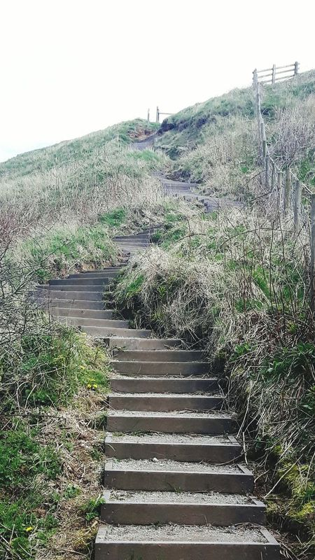 Bempton cliffes Winding Step By Step→→→