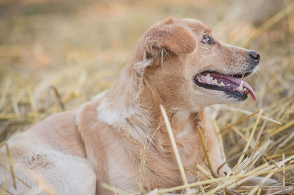 A cute dog in farm Alertness Animal Animal Head  Animal Themes Brown Chaff Curiosity Cute Cute Pets Dog Domestic Animals Farm Furry Grass Hay Looking Away Mammal Pets Relaxation Rural Stack Straw Thatch Zoology