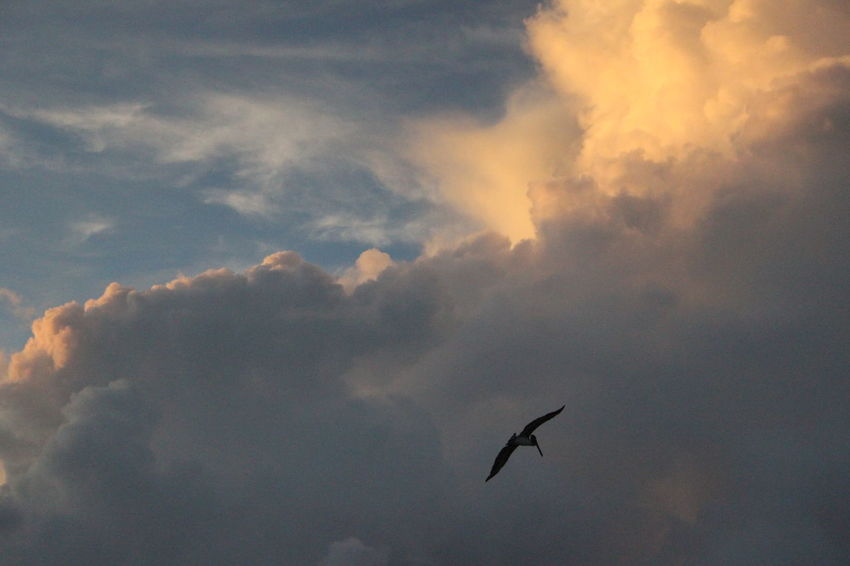 EyeEmNewHere Beauty In Nature Bird Cloud - Sky Early Morning Flying Silhouette Sky Spread Wings Sunrise No People