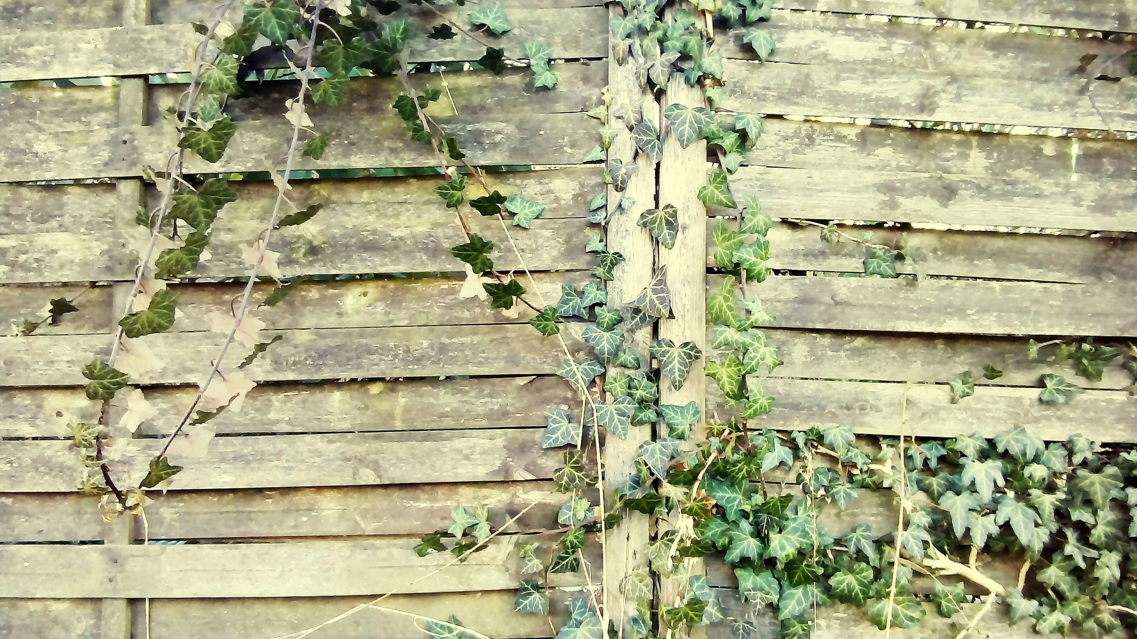 architecture, built structure, building exterior, brick wall, wall - building feature, weathered, old, full frame, plant, wood - material, ivy, wall, backgrounds, house, growth, stone wall, pattern, damaged, textured, outdoors