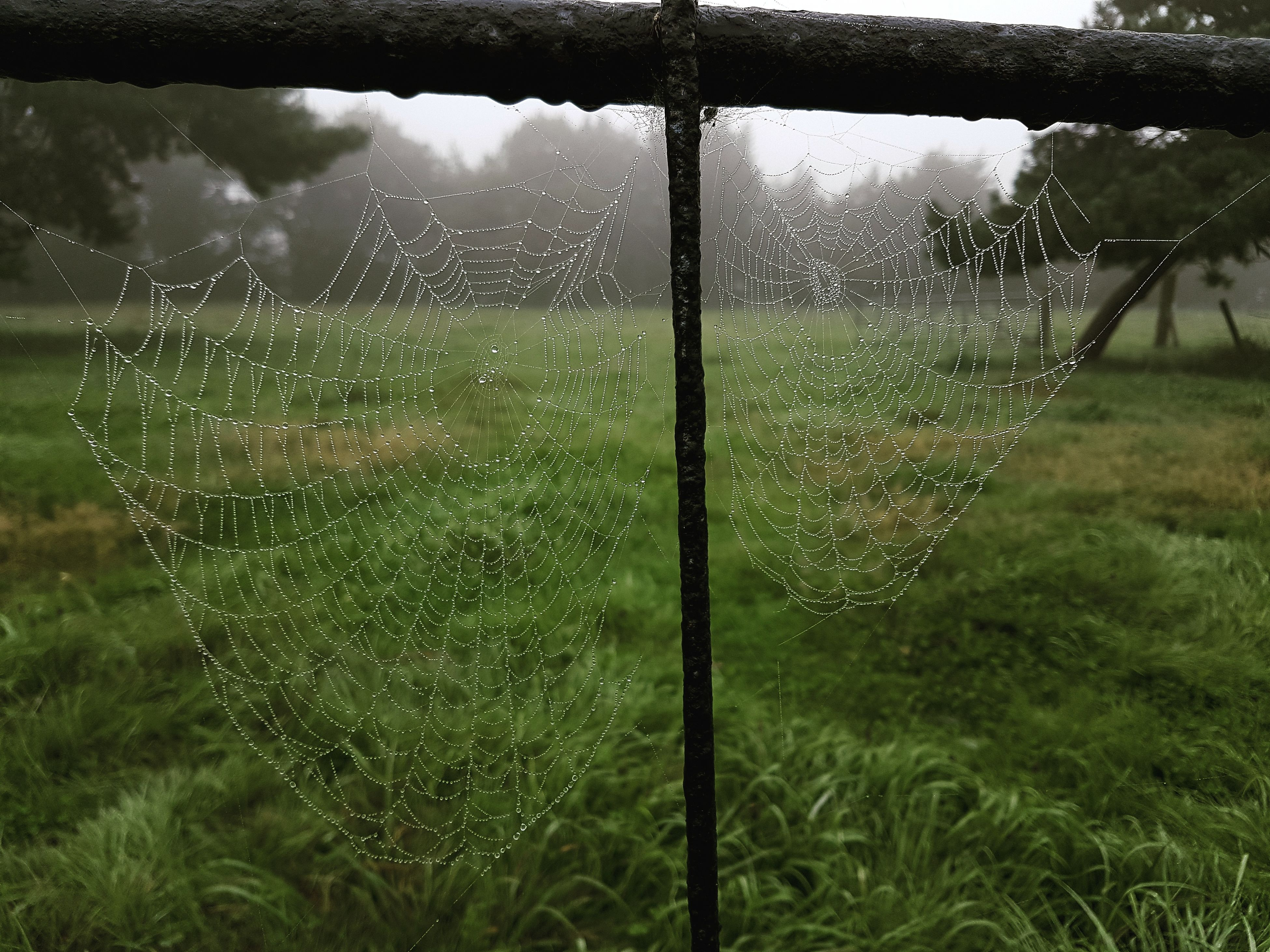 water, weather, wet, grass, close-up, drop, spider web, nature, fragility, green color, scenics, full frame, complexity, day, beauty in nature, tranquility, no people