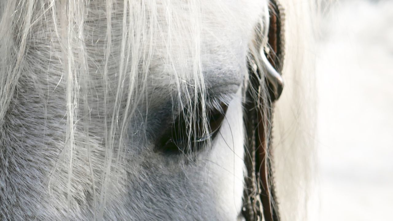 Reload; now No Edit, No Filter, Just Photography White Horse White Horse Portrait Horse Close Up Close-up Animal Body Part Animal Eye Horse Eye Pets One Animal Horse Photography  Horses Of Eyeem