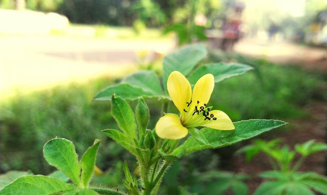 Lemon Lime By Motorola indian Nature Makes Me Smile EyeEm Nature Lover
