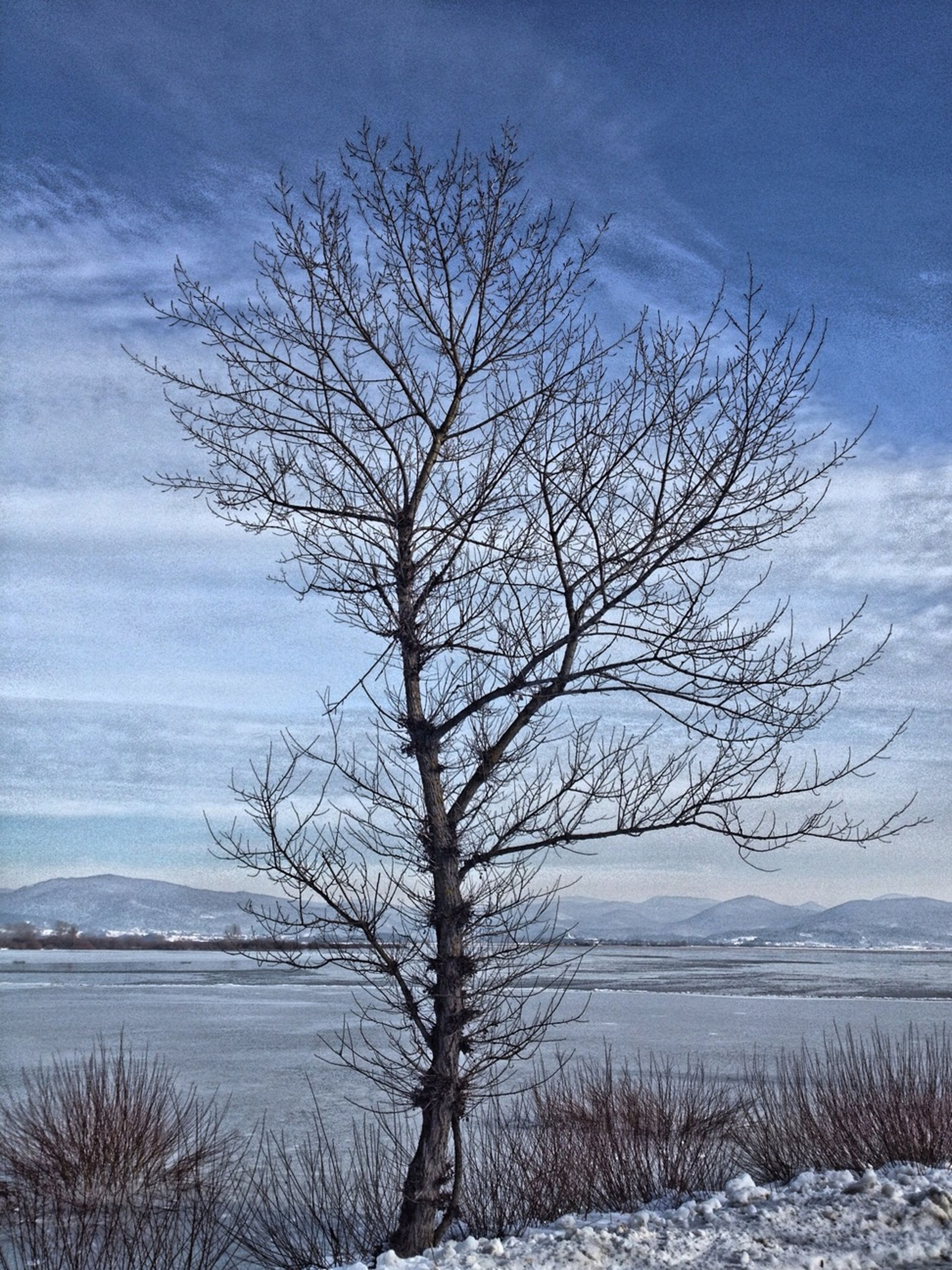 bare tree, tranquility, tranquil scene, winter, sky, snow, scenics, branch, tree, cold temperature, beauty in nature, nature, landscape, field, water, lake, non-urban scene, cloud - sky, weather, outdoors