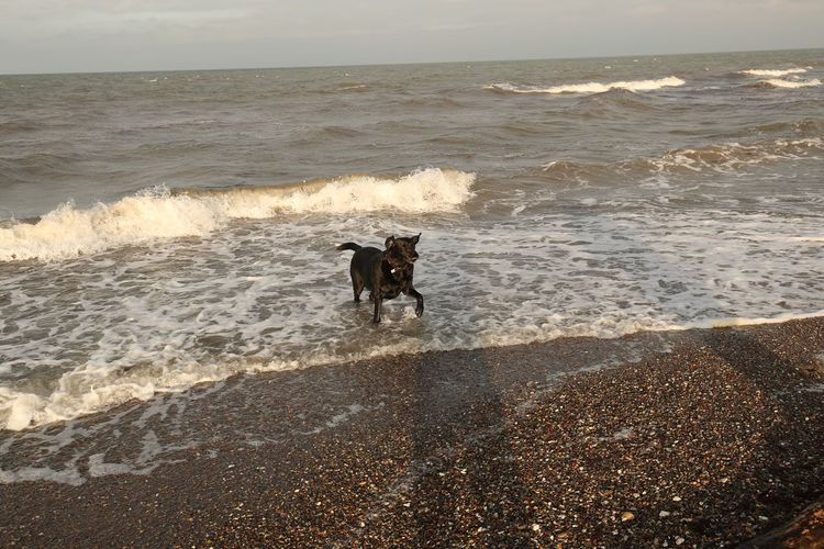 Sea Dog Pets Beach Wave Water One Animal Domestic Animals Sand Animal Themes Outdoors Motion Nature Sunlight Horizon Over Water No People Mammal German Shepherd Beauty In Nature Sky