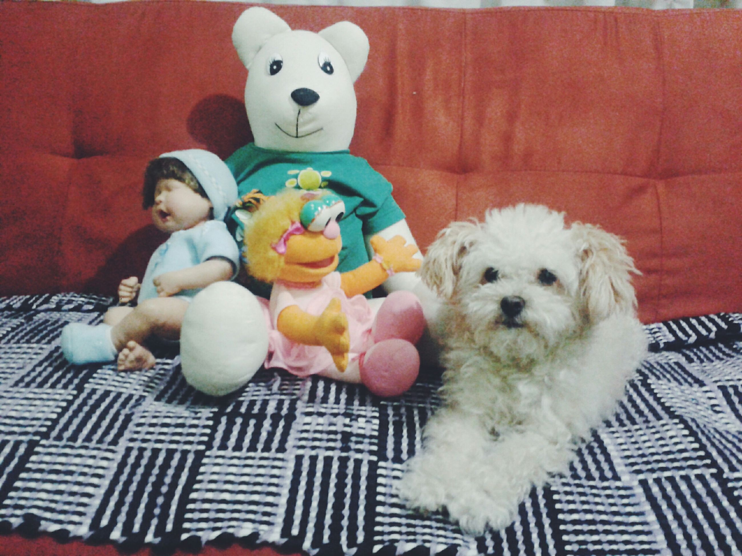 pets, indoors, animal themes, domestic animals, dog, portrait, looking at camera, toy, cute, stuffed toy, mammal, one animal, animal representation, home interior, white color, teddy bear, front view, humor, red, togetherness