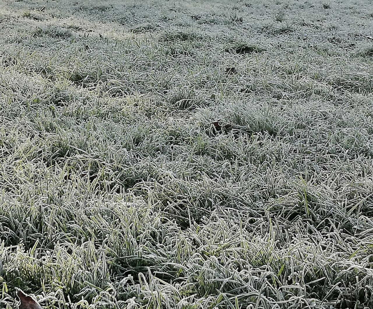 Iced Grass Grass Erba Ghiacciata Ghiaccio Ice Freddo Winter Inverno Gelata Cold Temperature Cold Nature Outdoors