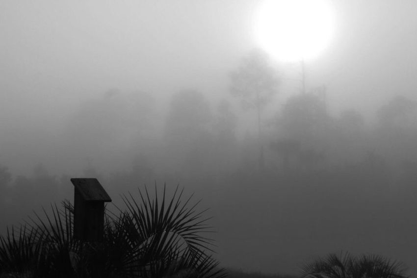 Fog Foggy Weather Blackandwhite Blackandwhite Photography Check This Out No People From My Point Of View My Favorite Things Relaxing Enjoying Life Flowers,Plants & Garden Outdoors Beauty In Nature Outdoor Photography Backyard Eye4photography