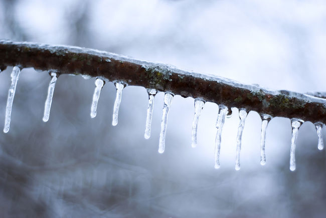 A row of icicles hanging from a ice coated tree branch. Beauty In Nature Blue Branch Branches Close-up Cold Cold Temperature Free Freeze Frozen Grey Ice Icicle Icicles In A Row Nature Outdoors Seasonal Seasons Tranquility Tree Water Winter
