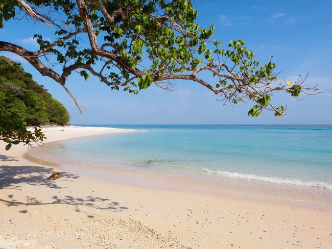 Beatiful beach on Ko Rok island Andaman Sea Beach Blue Coral Reef Island Ko Rok Koh Rok Nature No People Outdoors Sand Scenics Sea Thailand Tranquil Scene Travel Travel Destinations Tree White Sand Beach