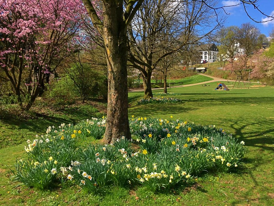 Beauty In Nature Day Flourish Flourishing Flower Flower Collection Flower Photography Flowers Flowers, Nature And Beauty Golf Golf Course Grass Grass Lawn Nature No People Outdoors Park Parks Spring Spring 2017 Spring Flowers Spring Time Springtime Tree