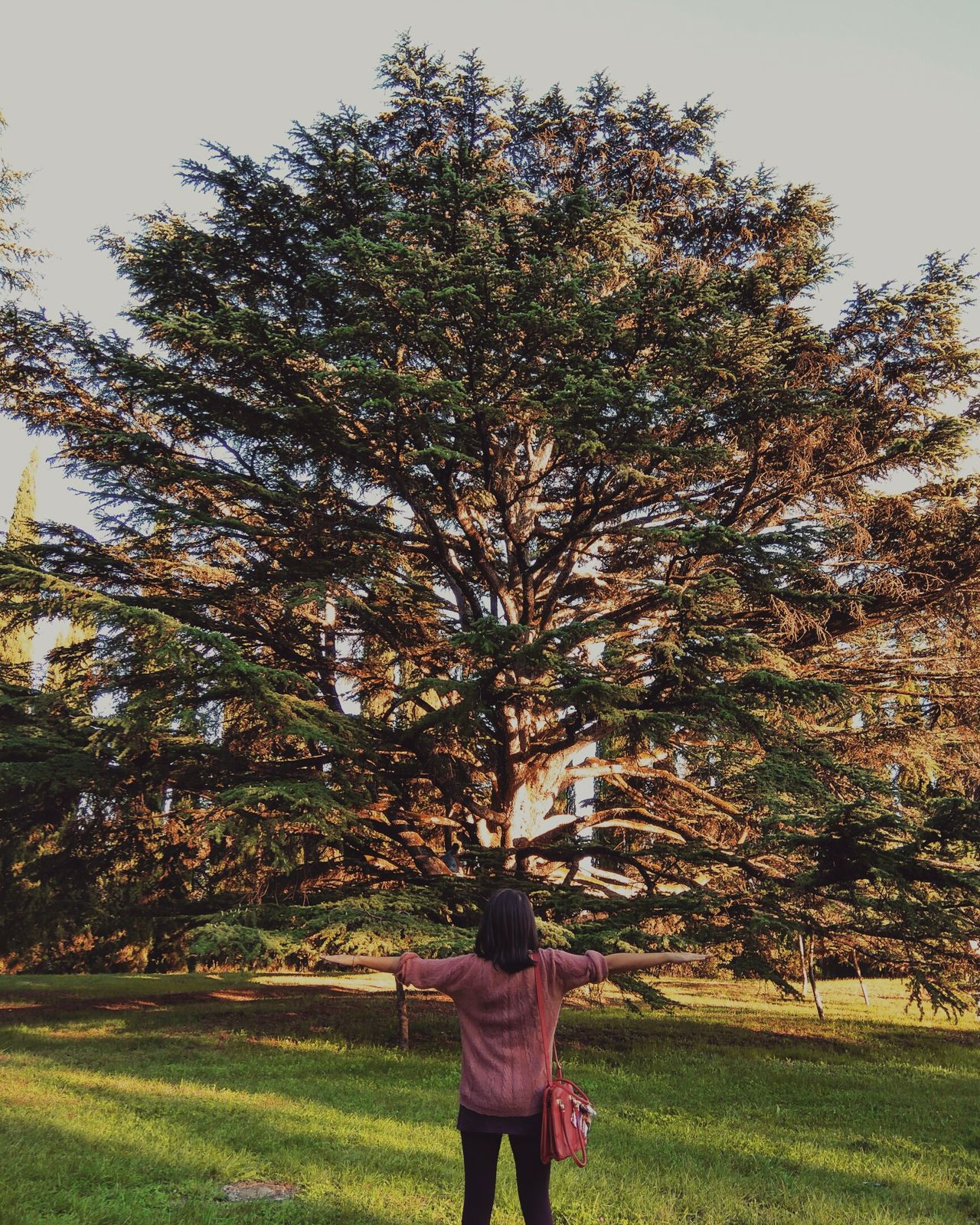 Girl Girl Power Day Freedom Resilience  Tree Big Tree Only Women Nature One Person Sky Spring Sunlight Nature_collection Beauty In Nature Energy Ornamental Garden Colors Outdoors Strength Hug Exploring Nature Photography Light Relax
