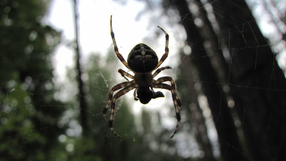 Beautiful stock photos of spider's, Animal Leg, Animal Themes, Animals In The Wild, Day