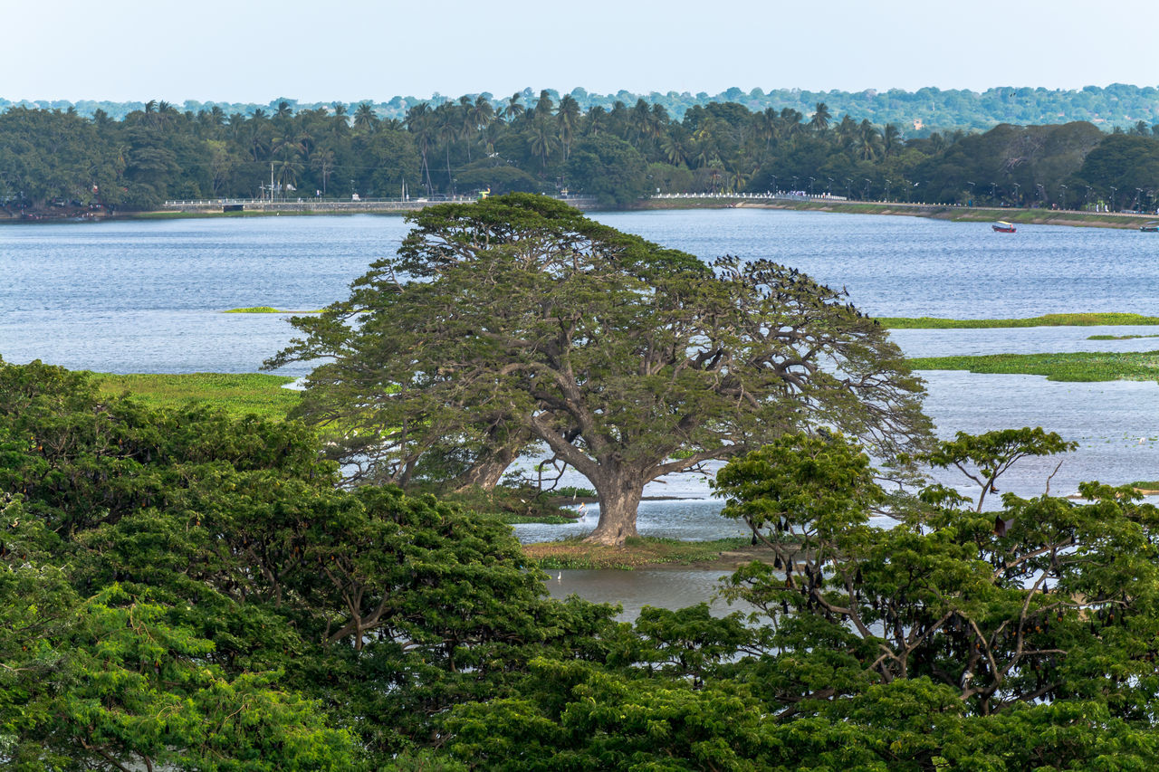 Beauty In Nature Clear Sky Day Flood Forest Grass Green Color Growth Lake Landscape Nature No People Non-urban Scene Outdoors Plant River Riverbank Scenics Sky Sri Lanka Tranquil Scene Tranquility Tree Water