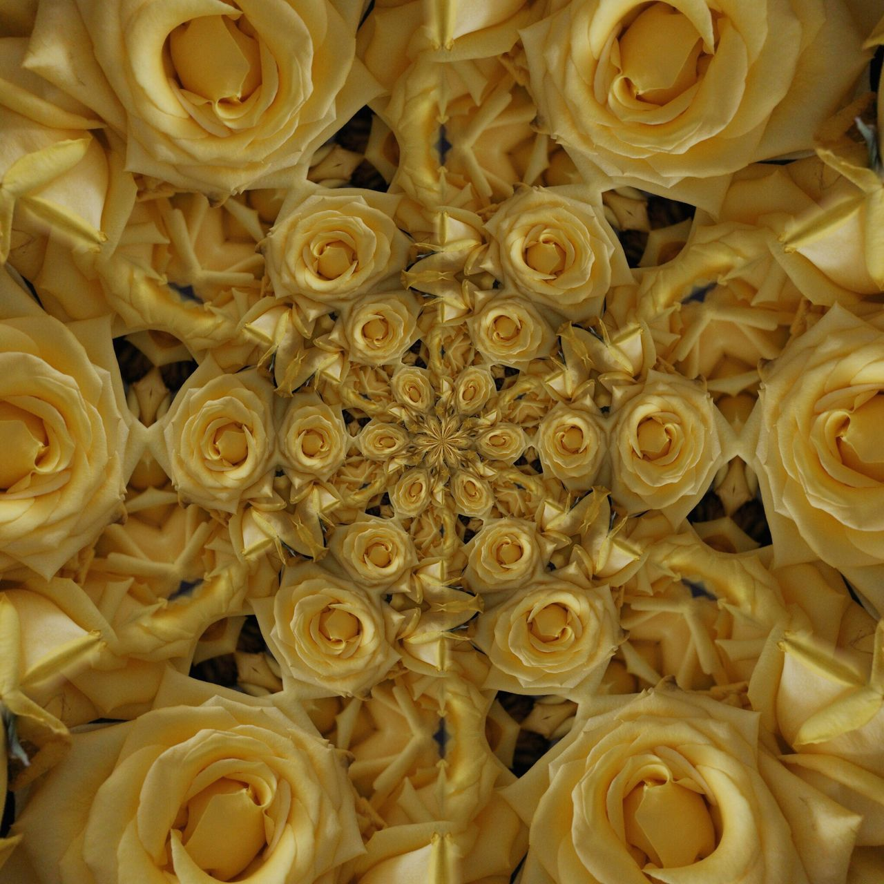 Showcase March rose 3drender Flowers Kaleidoscope Photoedit
